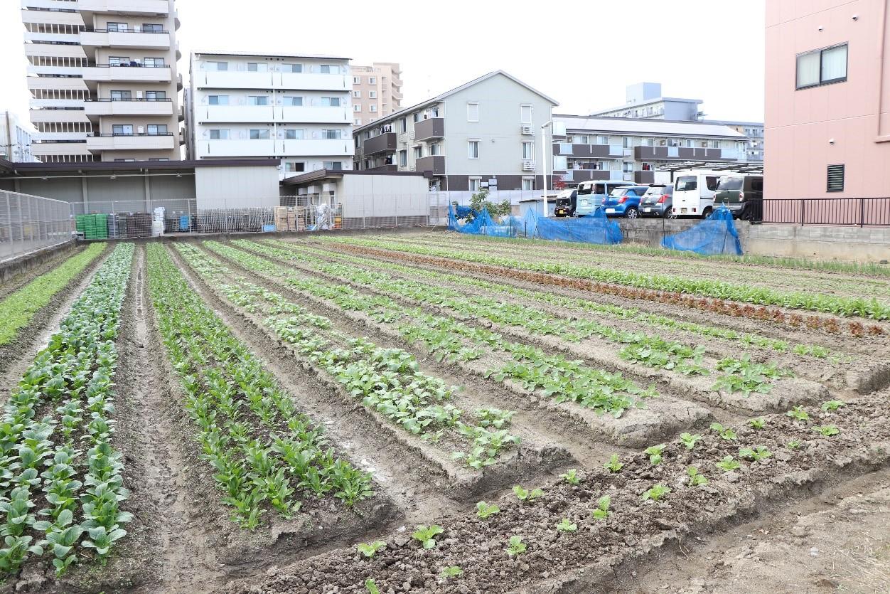 ▽遠くから見ても野菜の成長が分かるようになってきました!